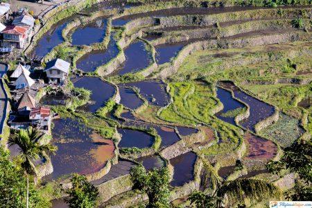 las terrazas de arroz