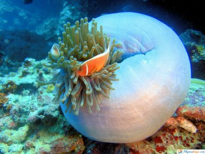 arrecife-filipinas